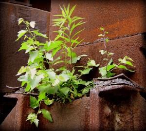 Die Natur kehrt zurück 2